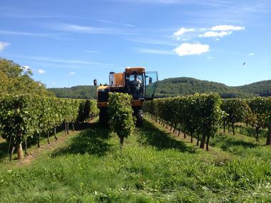 Vignobles Saint Didier