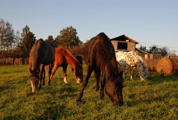 © Ferme équestre de Caffoulens - Bagnac sur Célé