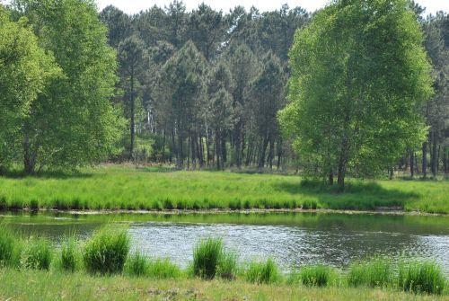 Garein--lagunes-du-piat--et-lande-rase-entretenue--5--web.jpg