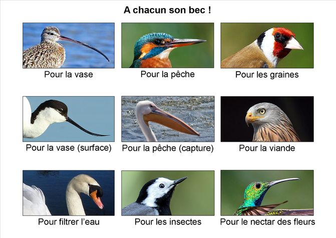 A-chacun-son-bec--.png