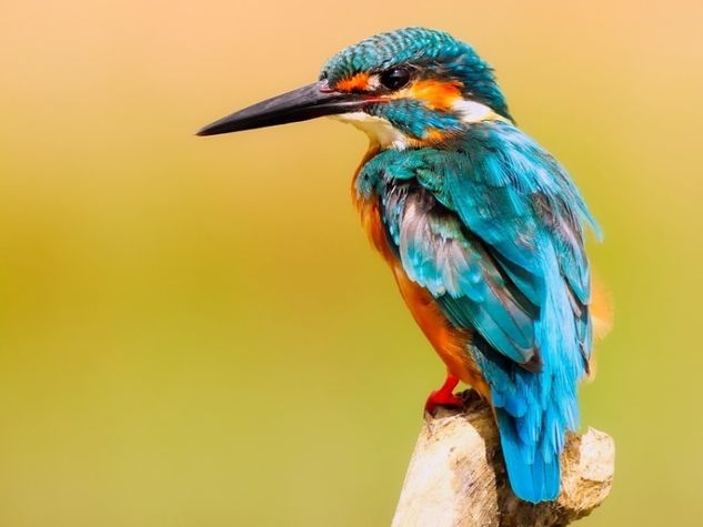 kingfisher-2046453-960-720-iloveimg-resized.jpg