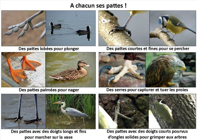 A-chacun-ses-pattes.jpg