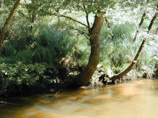 chenes-en-berge--confluence-2-leyres-web.jpg
