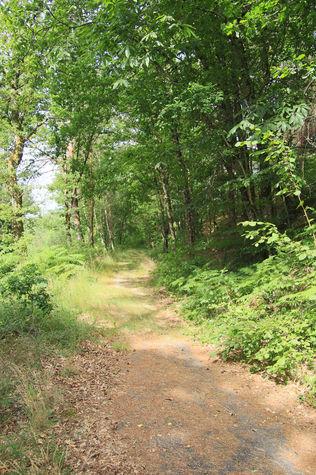 Lac de vergnes.Comiac.le chemin dans le bois.jpg