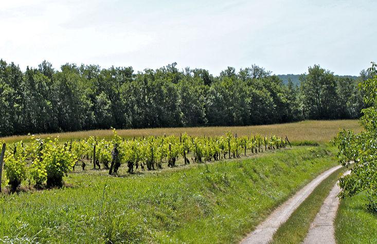 Chemin-vigne.jpg