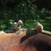 1429796665_oiseaux-fontaine.jpg