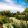 L'étang et la noue du jardin.jpg