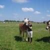 Les prés du centre équestre avec jument Penny maintenue par cavalière.JPG