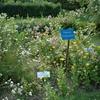 Jardin Botanique de Marnay-sur-Seine 2.JPG