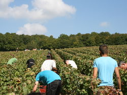 See more information about Champagne Dominique Boulard et Filles