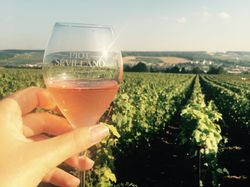 See more information about Champagne Piot-Sévillano