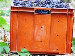 See more information about Champagne Faniel et Fils