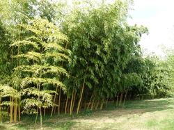 See more information about La Bambousaie du Mépas