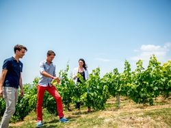 See more information about Vine Escape - Champagne Discovery Tour