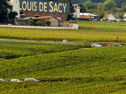 See more information about Champagne Louis de Sacy