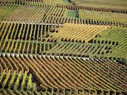 See more information about Champagne Bardoux Père & Fils