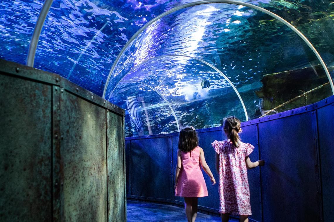 Grand Aquarium de Touraine 4.jpg