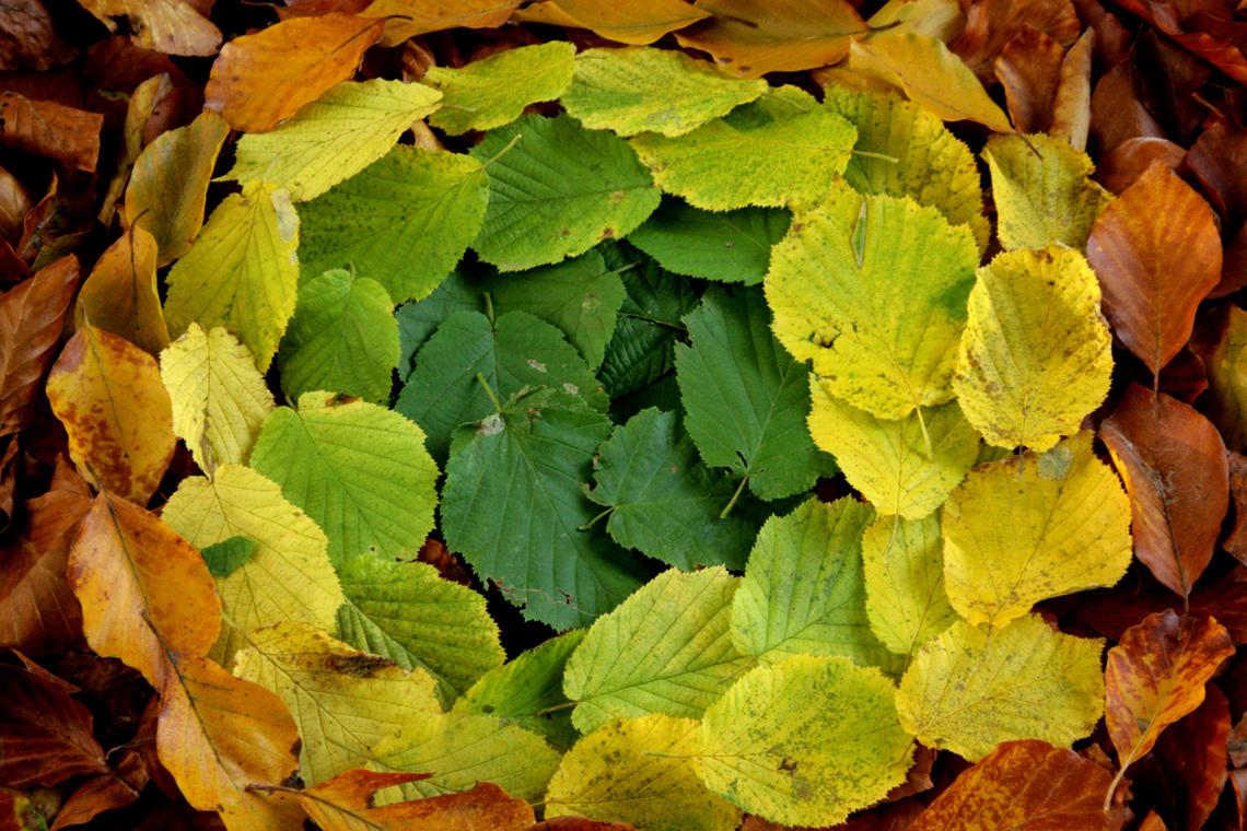 land-art-feuilles-d-automne.jpg
