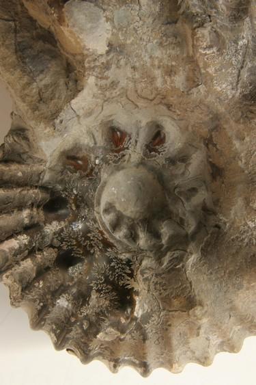 Ammonite (albien) détail © Musées de Troyes - J.M. Protte.jpg