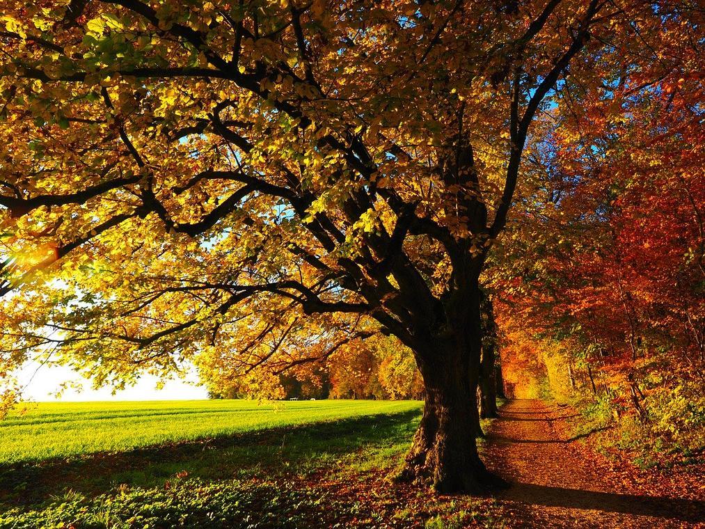 tree-779827_1280.jpg