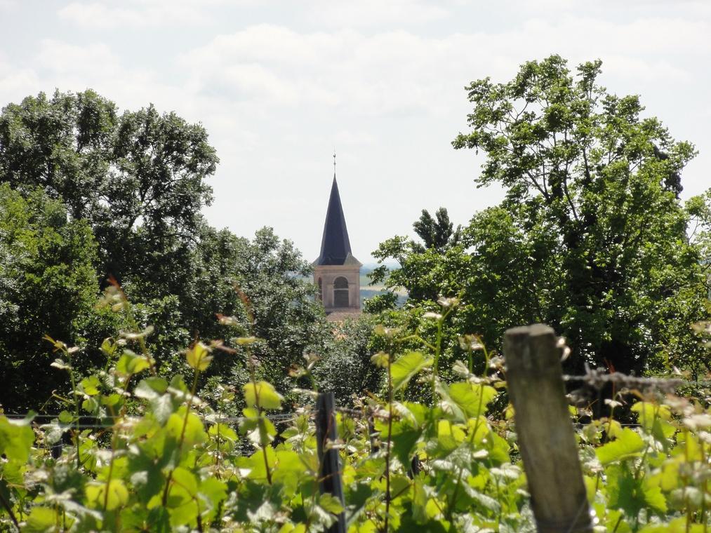 Les Vignes - Pissotte.JPG