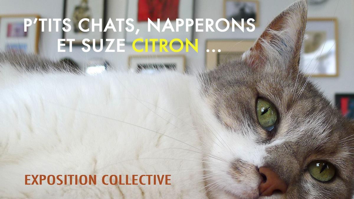 expo ptits chats, naperrons et suze citron du 1 au 4 mars.jpg