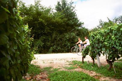 vélo-dans-les-vignes-photo-CRT-L-Savignac.jpg