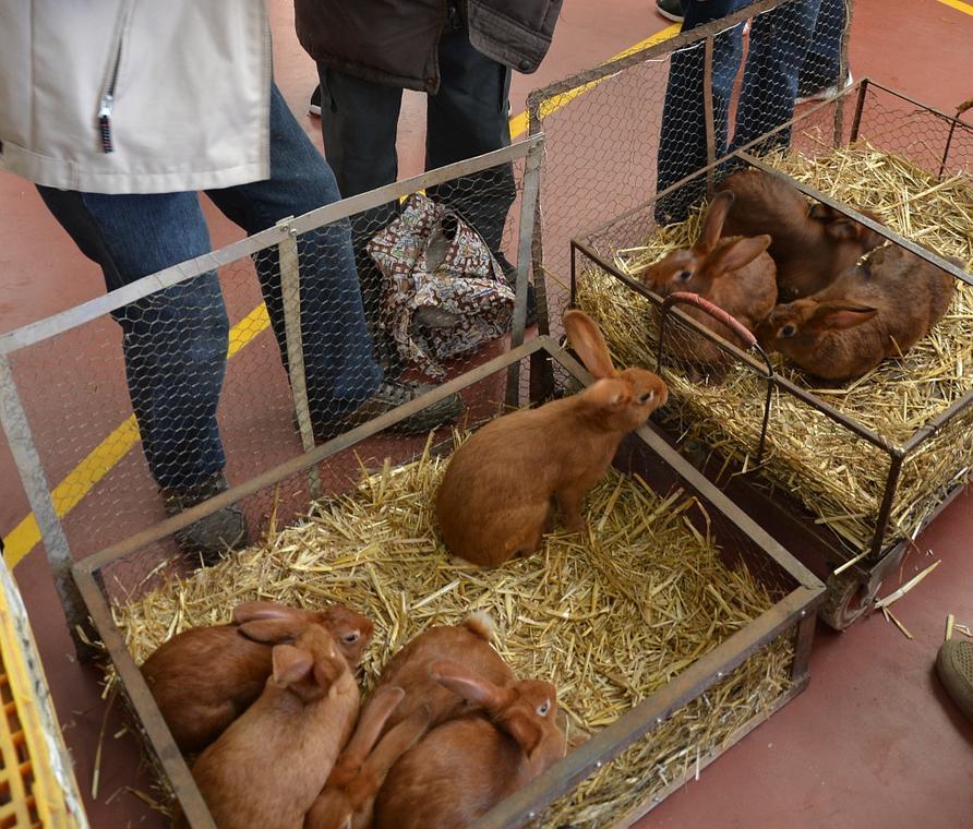 marché aux volailles vivantes