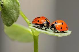 les insectes