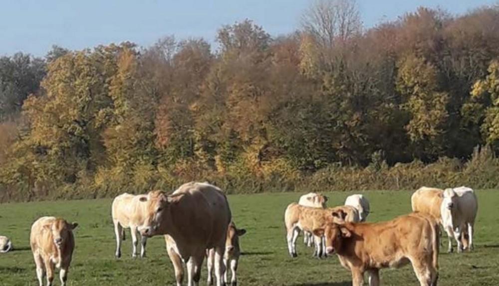 Gaec-clos-des-Marion < Autreppes < thiérache < Aisne < Hauts-deFrance