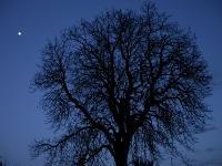 sortie_nature_nocturne