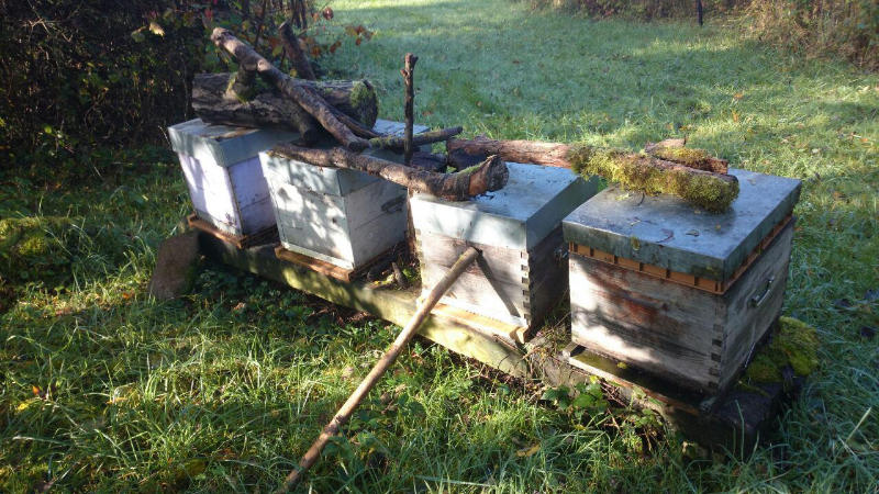 072 Apithalie - Rondelet apiculture