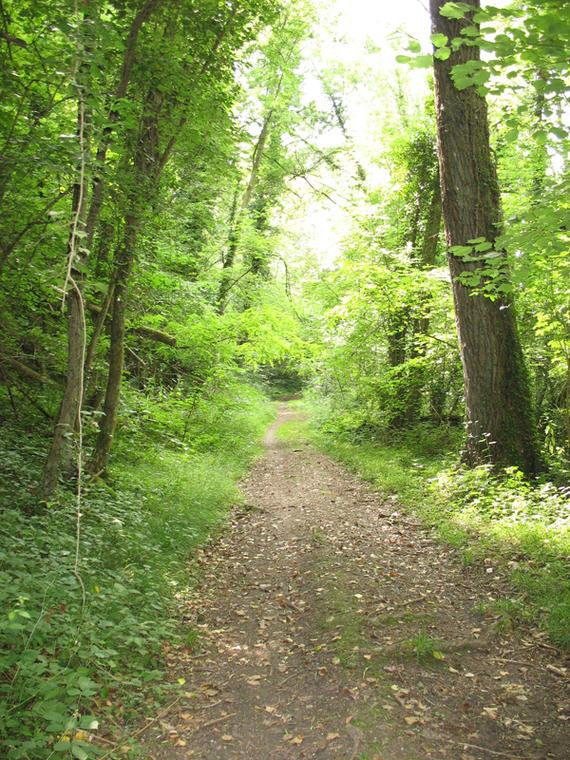 Forêt domaniale de Senonches - Forêt et vallée de l'Eure - Fontaine-Simon