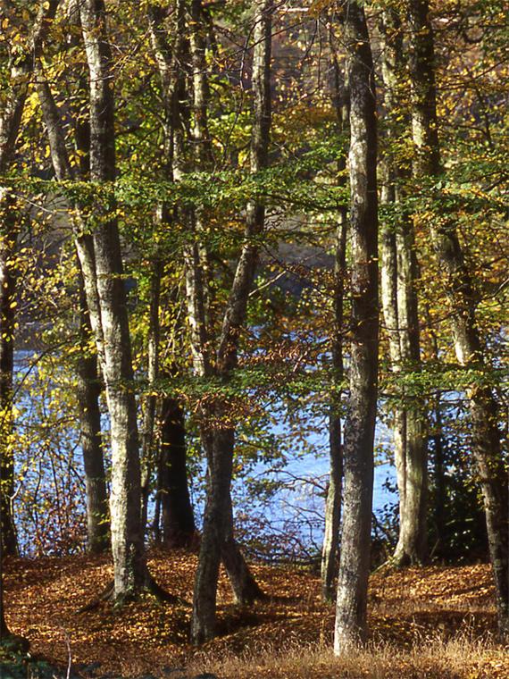 Forêt domaniale de Senonches - Les ronds de la forêt - Senonches