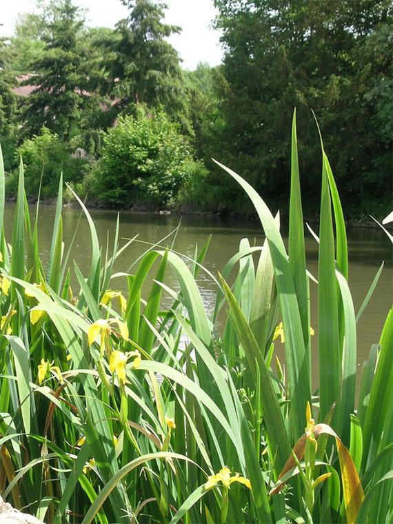 Forêt domaniale de Senonches - circuit de l'eau