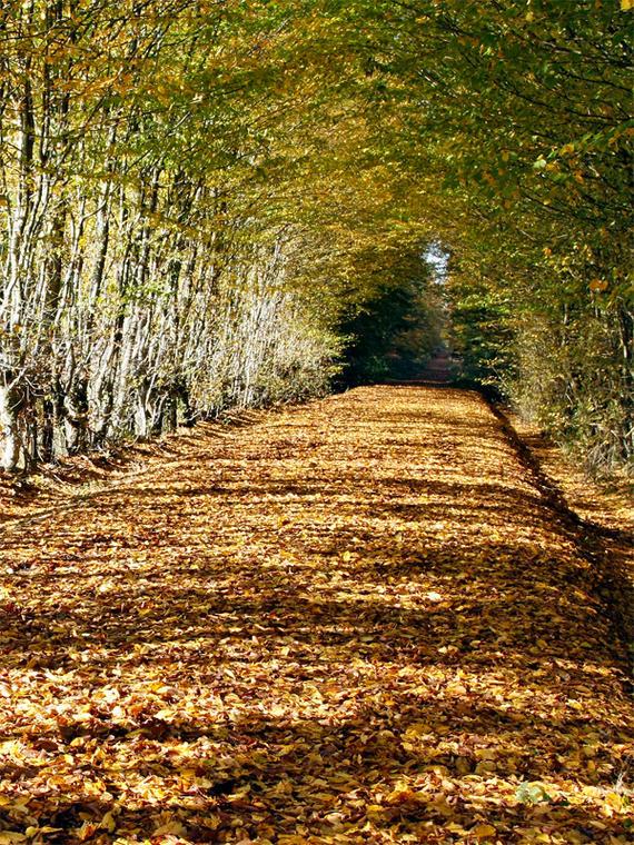 Forêt domaniale de Senonches - circuit nature - Senonches