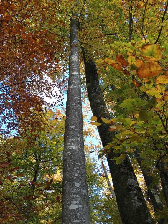 Forêt senonches