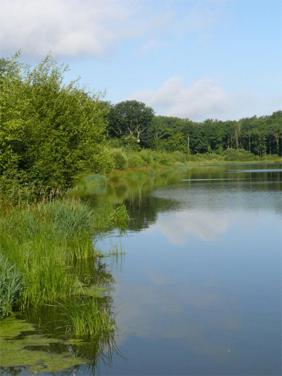 Le Bois Landry - Champrond-en-Gâtine