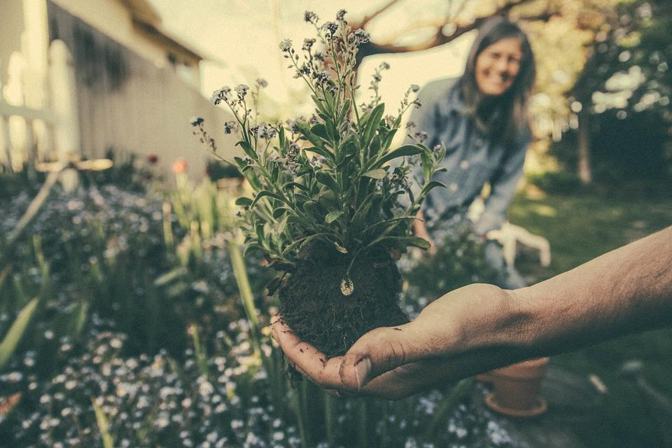 planting-865294-960-720