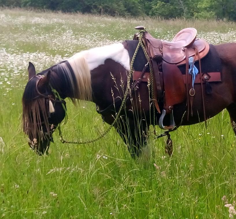180923_Journee_du_Cheval_Ranch_des_Centaurees_Albas_©Ranch des Centaurees