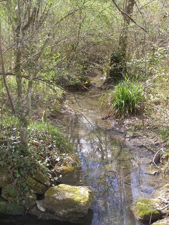 Ruisseau Carnac-Rouffiac©Rachel Puyo