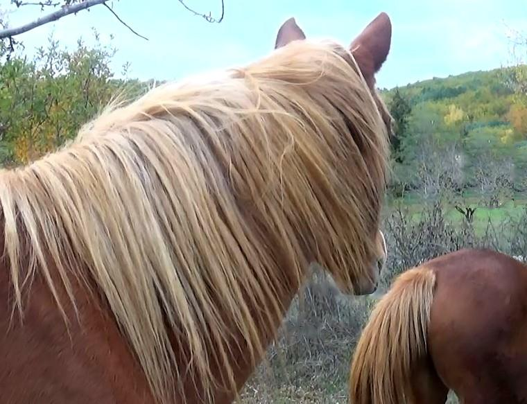 poney cheval équitation