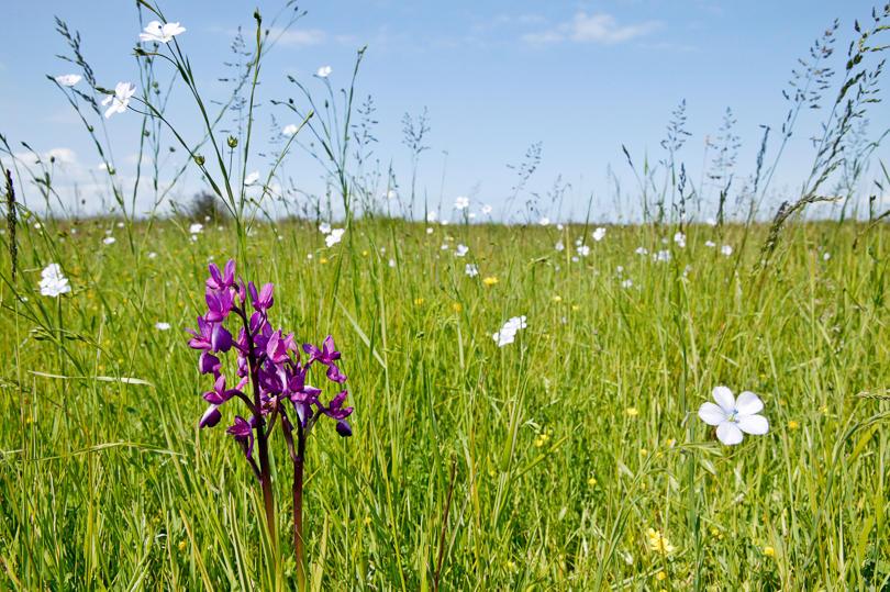 TD000089_prairie-orchidee-1