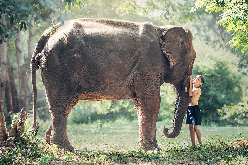 elephant-1822492_1280©pixabay