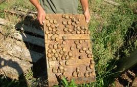 escargots cyril gourdon 1