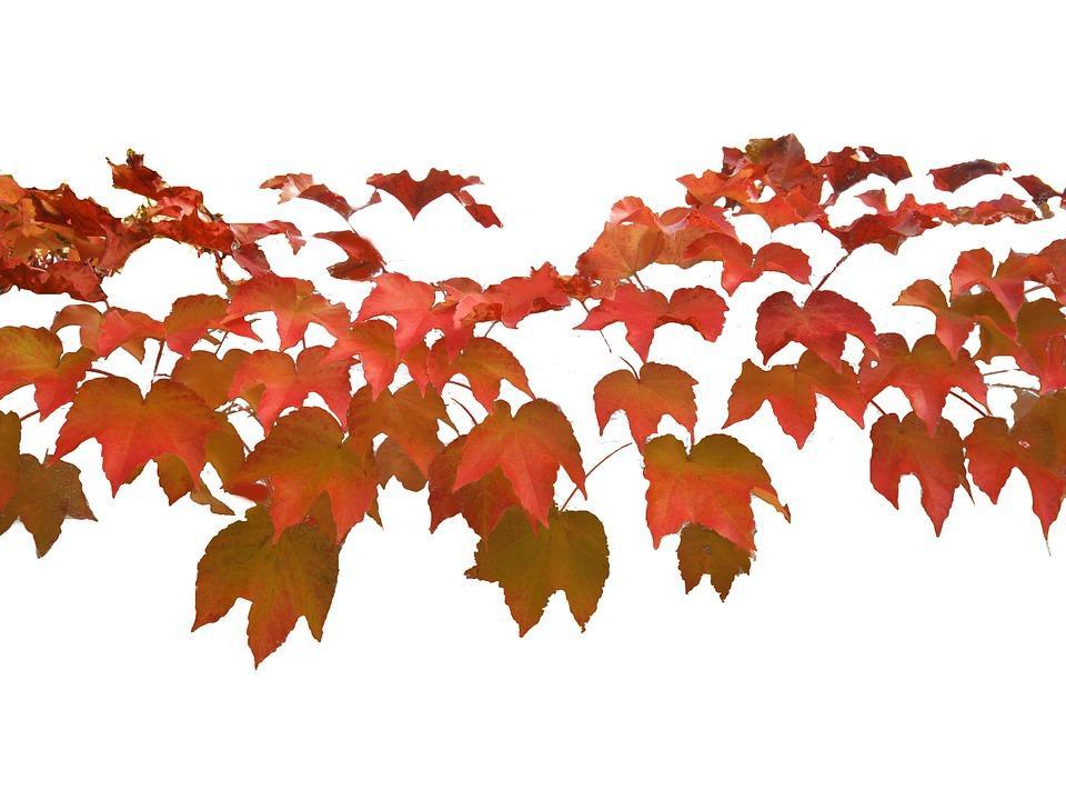 fete automne