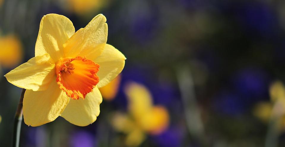 flower-3306691_960_720