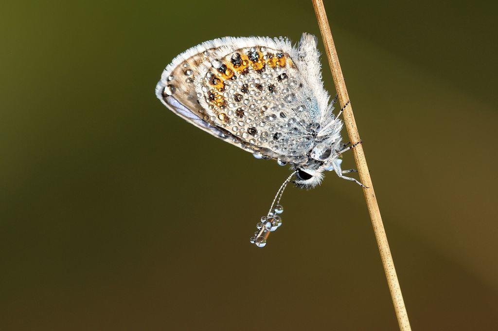 maraisdebonneond-14-sortie papillons- Jean Canc+¿s