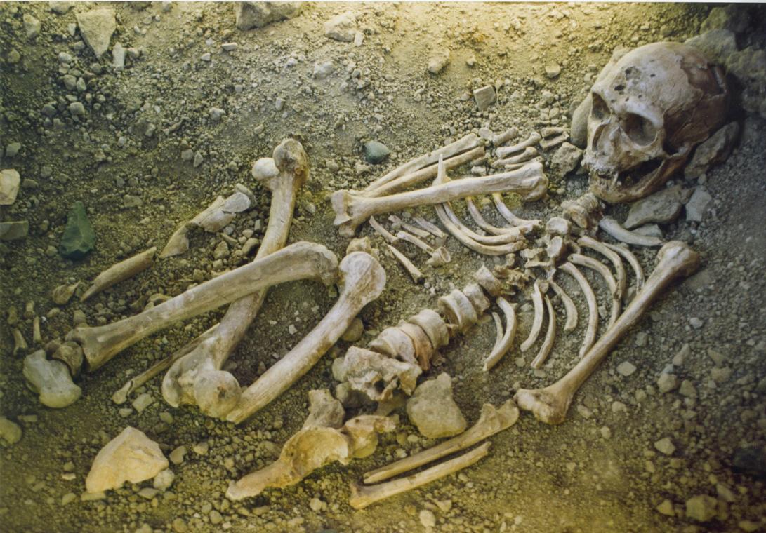 squelette Néandertal