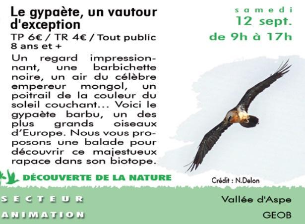 CPIE---le-gypaete-un-vautour-d-exception